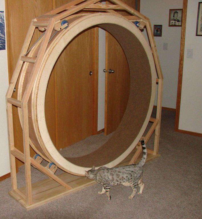 Беговое колесо для кошек сделать своими руками 70