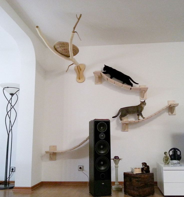 how to make a cat happy indoors