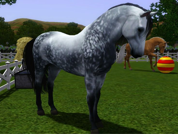 Sims 3 Horse Accessories - Bing images
