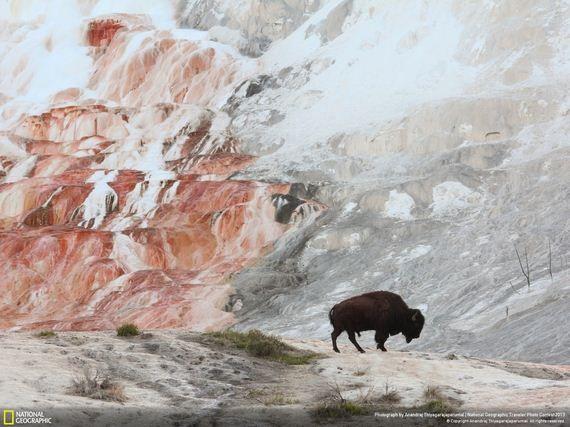las mejores fotos de animales salvajes