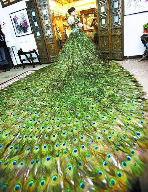Peacock feather dress funny fashion pinterest for Peacock feather wedding dress