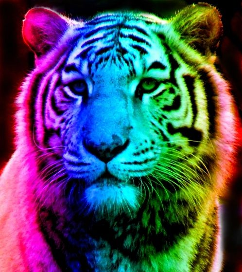 Rainbow Tiger 12 by TomboyTigress | Rainbow Colors | Pinterest