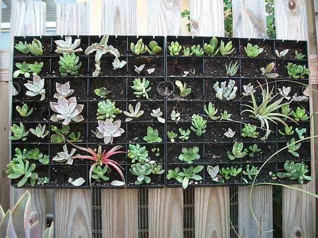 Vertical succulent garden Flowers and Gardening Pinterest