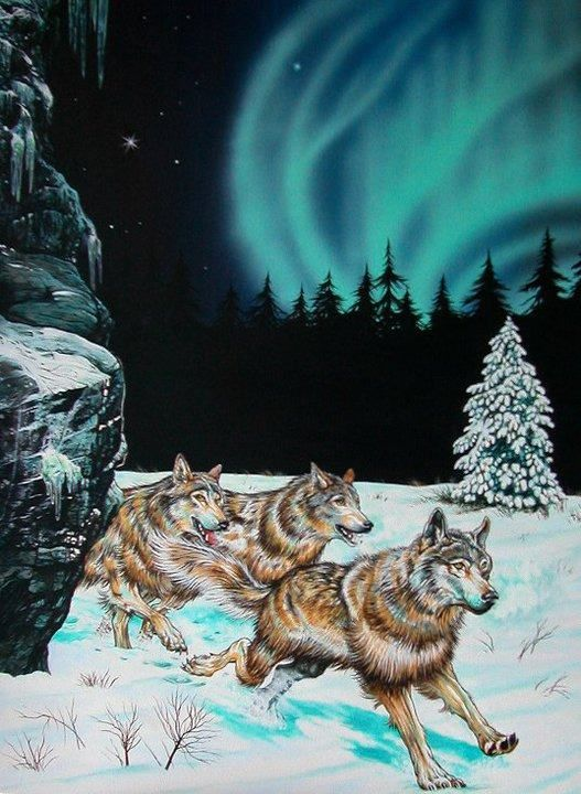 howling wolf pack of wolves running wolves at night