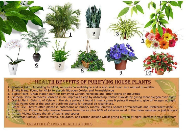 Plants Good For Your House Good For The Body Pinterest