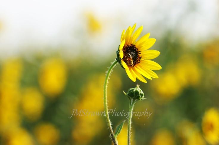 Kiss From a Honey Bee | Simplicity | Pinterest