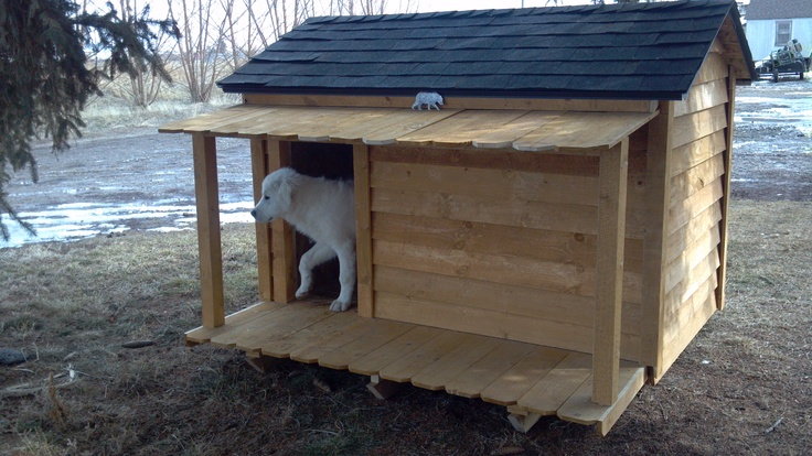 our new dog house my great pyrenees pinterest With great dog houses