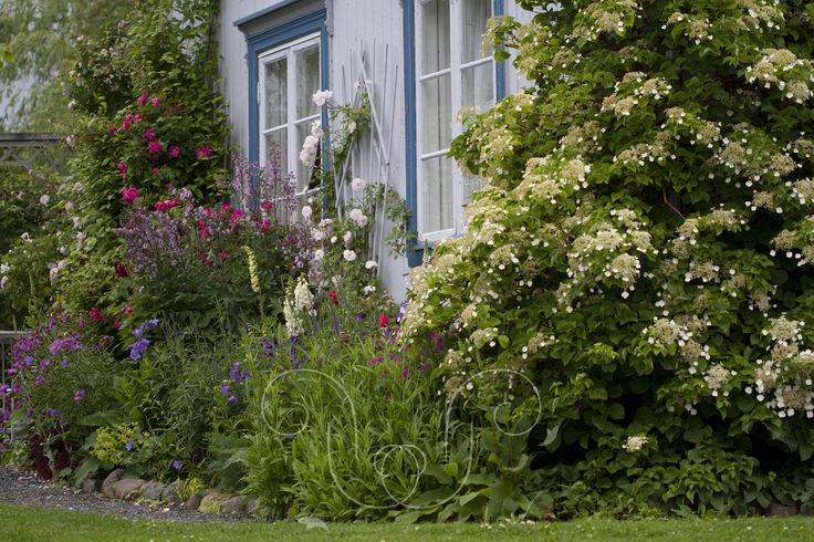 Dense with Cottage garden plants
