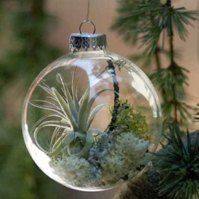 Plant ornament | Get Crafty | Pinterest