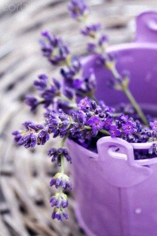 Lavender flower in bucket  close upLavender Flower Close Up