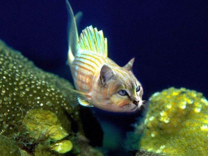 Cat fish animals pinterest for Cat fishing 2