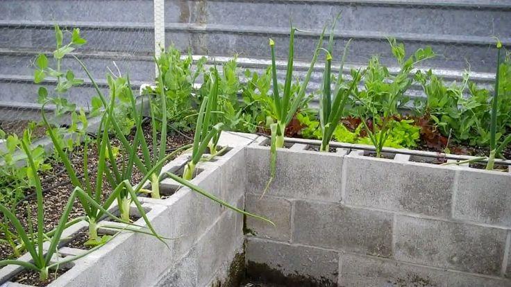 Cinderblock raised beds gardening pinterest for Cinder block garden designs