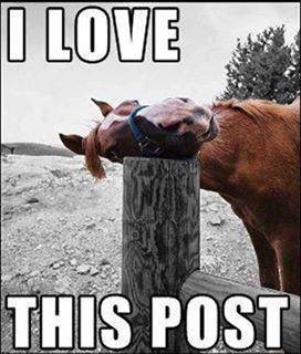 Very Funny Horse Bumper Stickers. | Cute & Random!