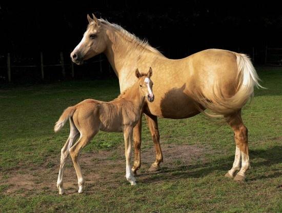 Newborn horse standing - photo#23