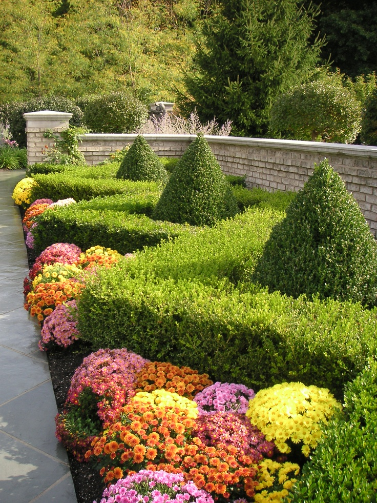Zigzag boxwood hedge and mums for Garden design ideas with hedges