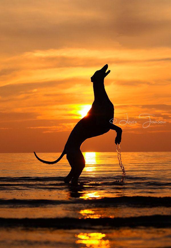 Le Greyhound 35422f2f6cefc3389c737118b9894f13