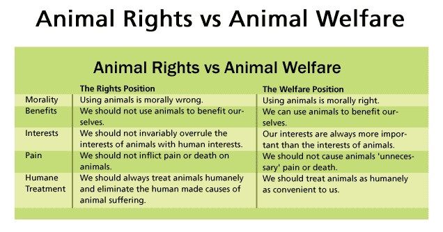animal rights vs animal welfare research The journal of applied animal welfare science is the leading peer-reviewed journal on the science of animal companion animals and animals used in research.