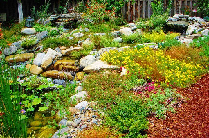 Ca Friendly Drought Tolerant Garden Gardens Pinterest