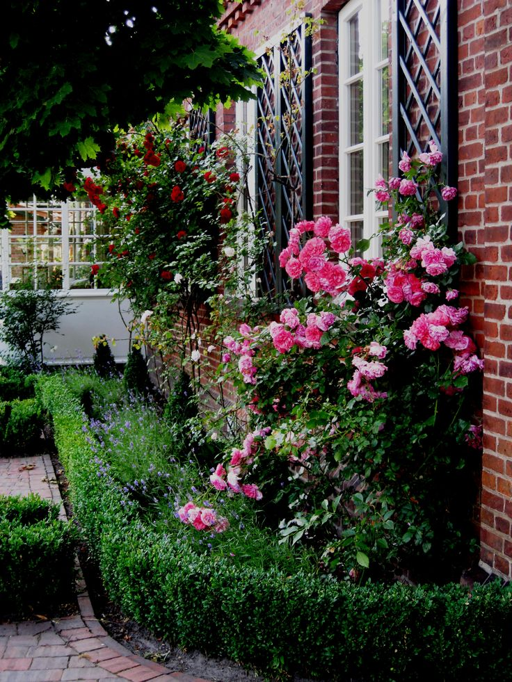 Landscaping With Boxwoods And Roses : Bricks trellis boxwood and roses front landscape