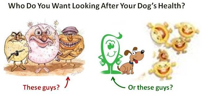 probiotics for dogs essential for optimal health   what why when