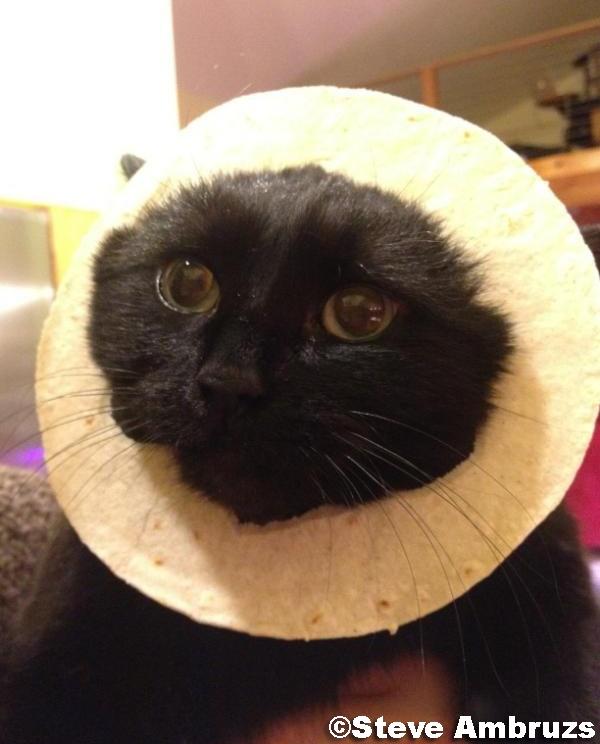 Cat In Bread Box Gif