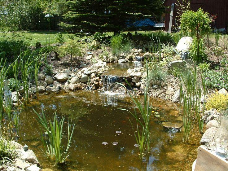Natural looking waterfall and koi pond jeff bond for Natural koi pond