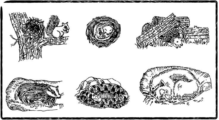 Free Coloring Pages Of Hibernating Animals Hibernate