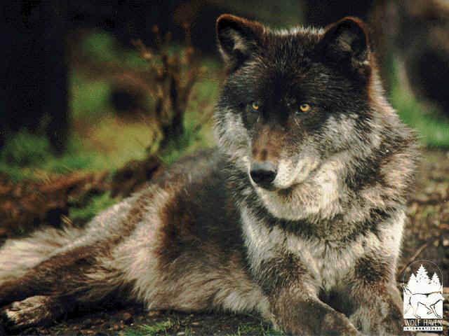Peter And The Wolves Lanternlight Break Up Break Down