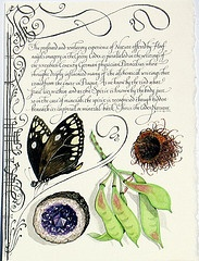 Mira calligraphiae monumenta, Joris Hoefnagel (1542 - 1601).