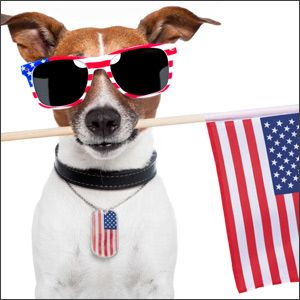 4th of july dog photos
