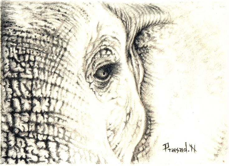 Elephant Pencil Sketch | Pencil Drawings | Pinterest