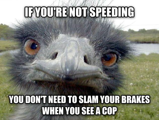 Funny Ostrich Meme