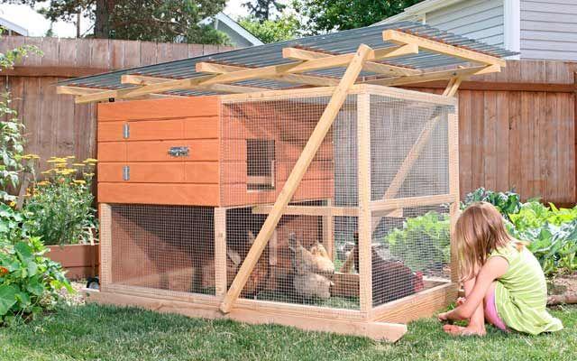 Tips for Raising Urban Chickens  EnvironmentalSustainability  Pint