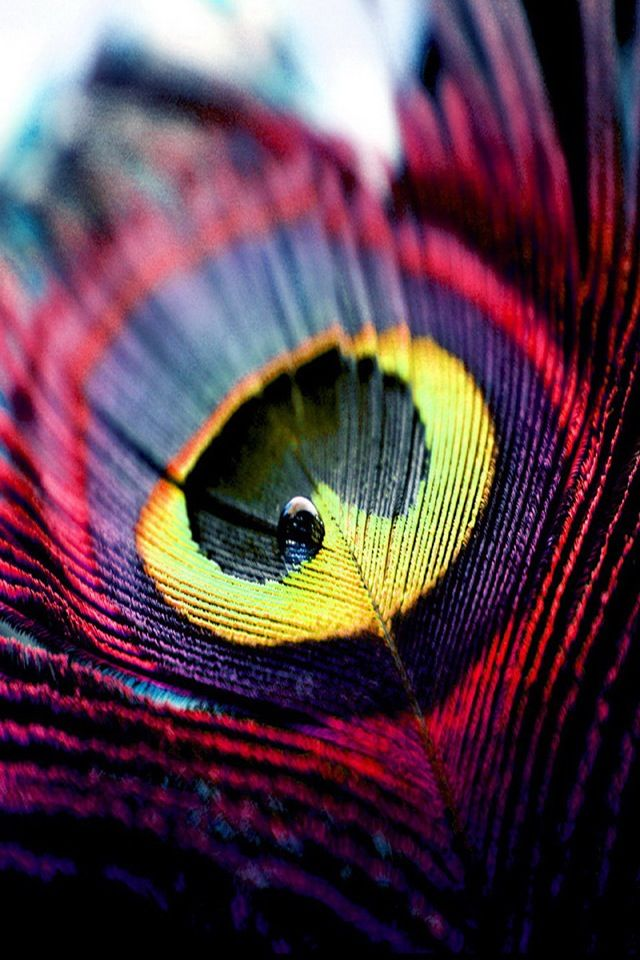 Different but pretty color for a single peacock feather tattoo idea ...