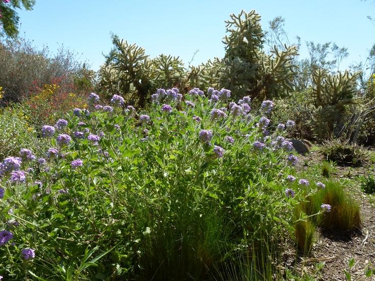 Phoenix Botanical Gardens Beautiful Gardens Nature