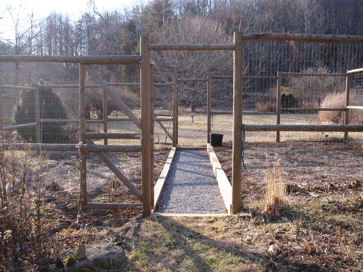 Pin by alison boob on garden pinterest - Deer proof vegetable garden ideas ...