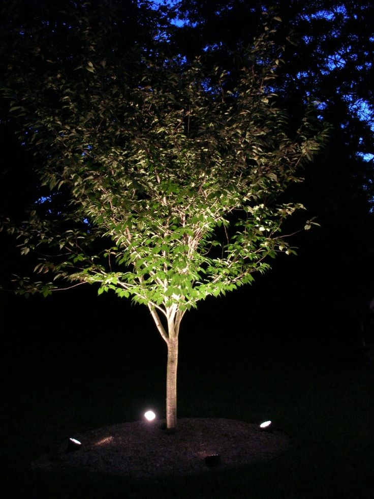 tree uplighting ideas landscape streetscape