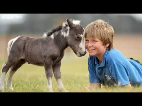 the smallest in the world horse  The world's smallest horse.
