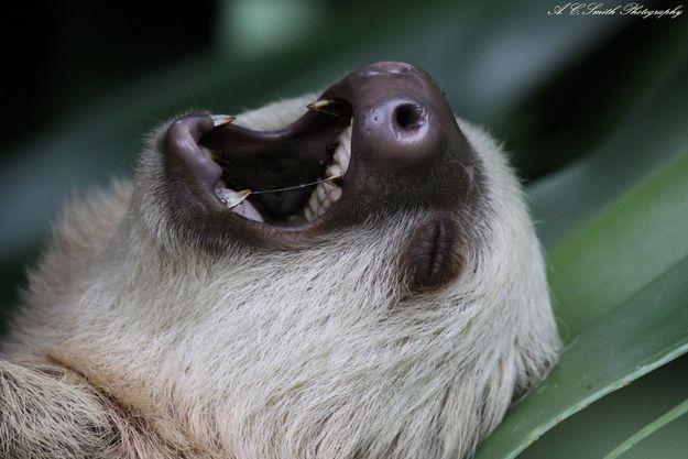 additional sos sloth singing