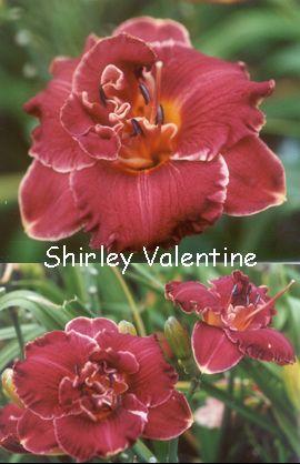 shirley valentine the play