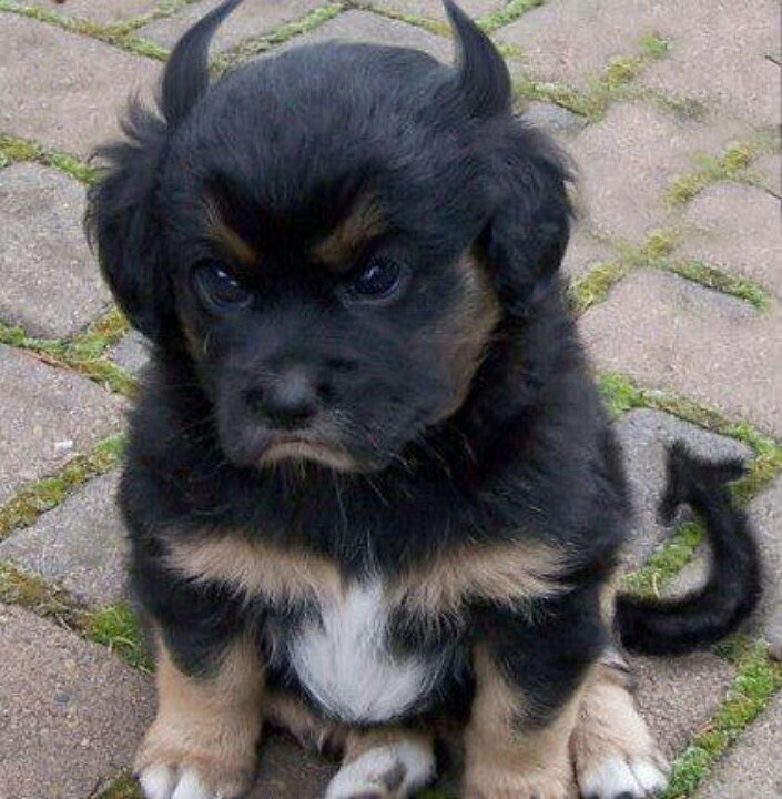 Devil dog LOL!!! | Love of Dogs | Pinterest