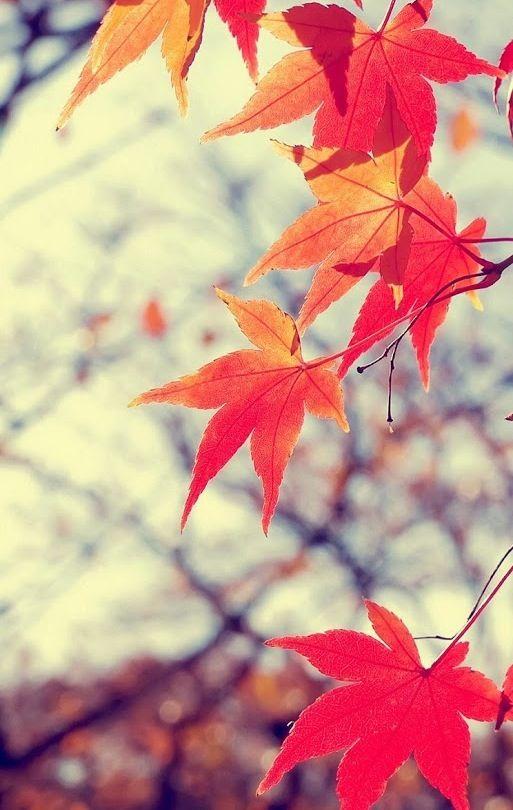 fall leaves wallpaper phone wallpapers pinterest