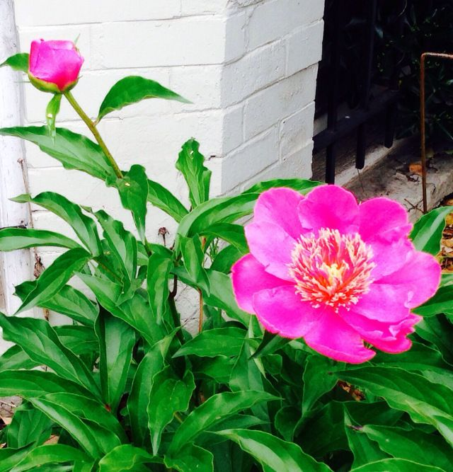 flowers capitol hill denver