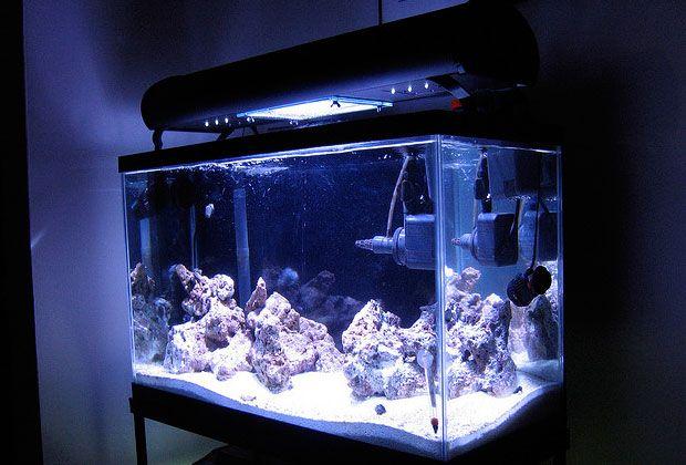 aquarium lighting guide