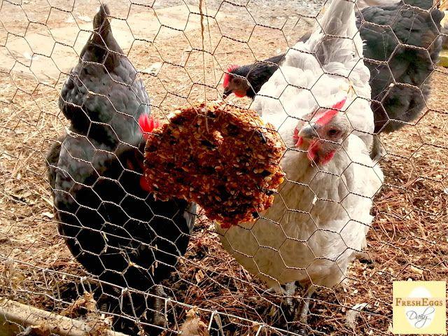 Fresh Eggs Daily®: Flock Block Knock Off - Homemade Chicken Boredom ...