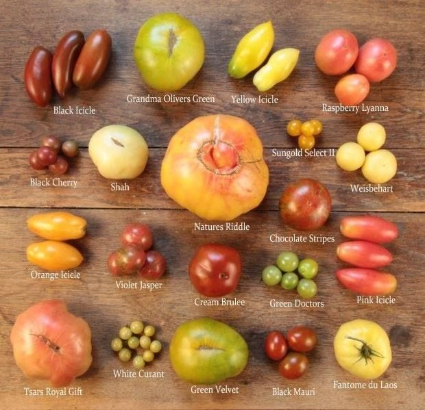 What Is Your Favorite Type Of Tomato Garden 400 x 300