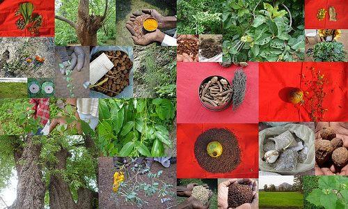 Medicinal plants used in high blood pressure