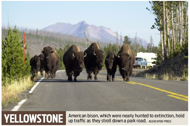 visiting yellowstone during memorial day weekend
