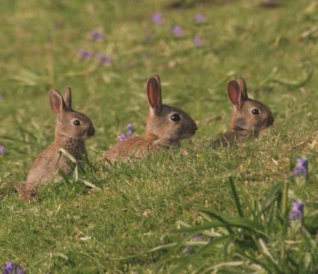 baby wild rabbits | my farm | Pinterest
