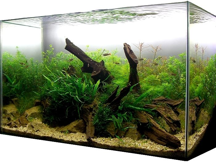 Driftwood in aquarium aquariums pinterest for Fish tank driftwood
